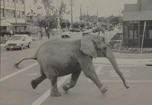 elefanten på fars bil