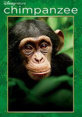 Se Chimpanzee på Netflix
