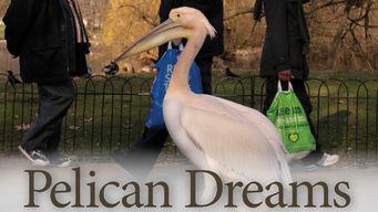 Se Pelican Dreams på Netflix