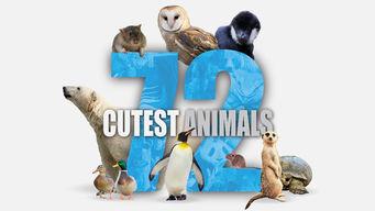 Se 72 Cutest Animals på Netflix