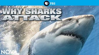 Se Why Sharks Attack på Netflix