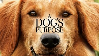 Se A Dog's Purpose på Netflix