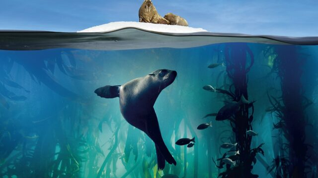James Honeyborne netflix dokumentar natur danmark