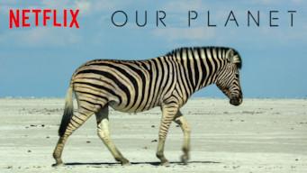Se serien Our Planet på Netflix