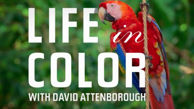 Life in Color David Attenborough netflix dokumentar